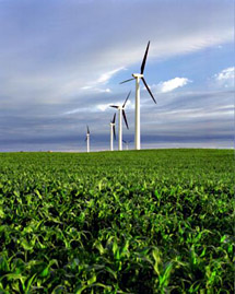 corn field with wind turbines