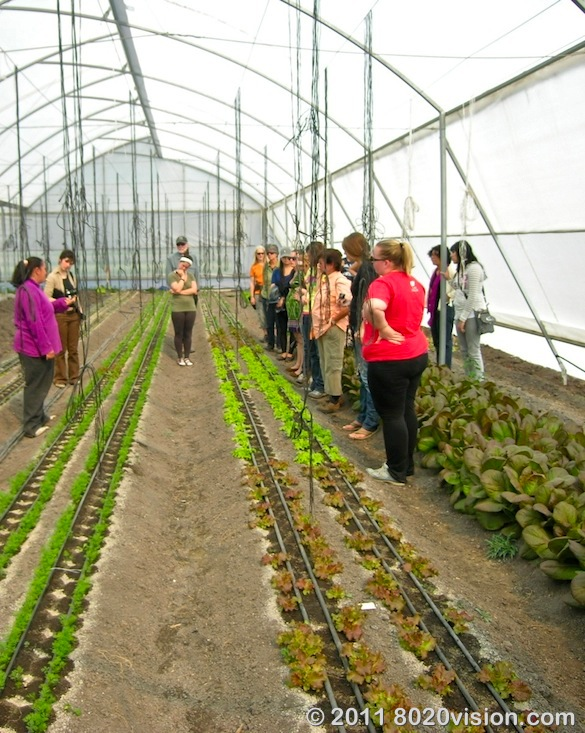Greenhouse at Penon de los Banos farm cooperative, Mexico